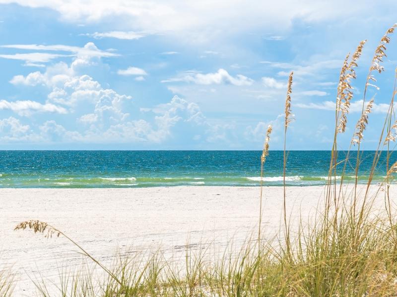 St. Pete Beach with dune grass